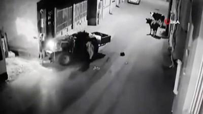 guvenlik kamerasi -  'İnekten kurtulayım' derken duvara çarptı, kazaya sebep olan ineklerin traktör sürücüsüne ilginç bakışı da kameraya böyle yansıdı