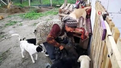 Hasta hayvanlar için barınak kurdu