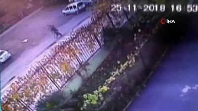 bisiklet -  Fuhuş evine giden şahıslar müşterileri çıkartıp gasp yaptı...Hırsızlar kamerada Haberi