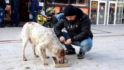 Sokak hayvanlarının gönüllü bakıcısı - TEKİRDAĞ