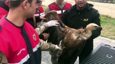 salda - Yaralı akbabayı jandarma kurtardı - ŞANLIURFA