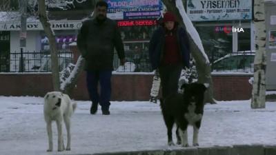 Ardahan'dan kartpostallık manzaralar...Gece eksi 18'i gördü, Türkiye'nin en soğuk ili oldu
