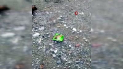 ormanli -  - Tokat'ta 4 kopek yol ortasında ölü bulundu