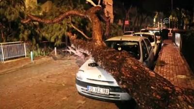 Yerinden sökülen ağaç otomobilin üzerine devrildi - İZMİR