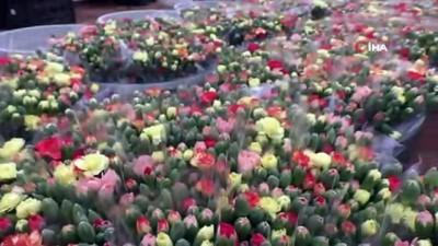 ihracat rakamlari -  Avrupa'nın çiçeği Antalya'dan