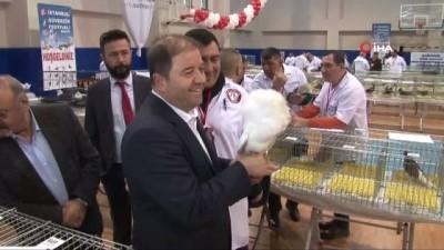 Dünyanın dört bir yanından getirilen binlerce güvercin birincilik için yarıştı