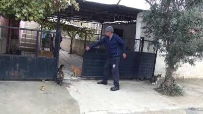 Kedi-köpek dostluğu - MANİSA