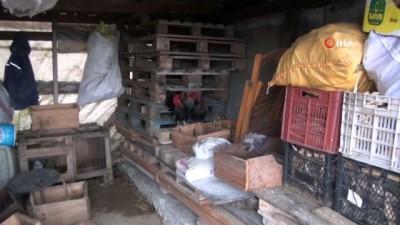 Sinop'ta 70 tavuk telef oldu