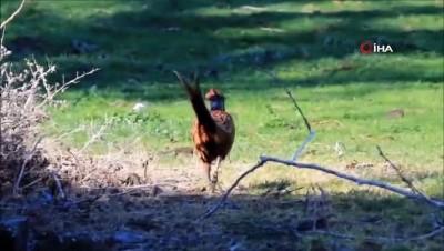 Kuş ve doğa fotoğrafçılarının 'Kuş Cenneti' talebi