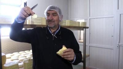 'Malakan peyniri' yeniden gün yüzüne çıkartıldı - KARS