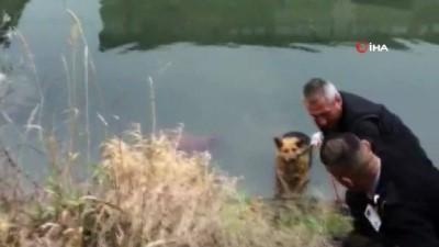 insan zinciri -  Su kanala düşen köpek kurtarıldı