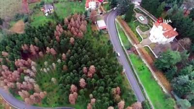 Atatürk Köşkü Ormanı'nda '12 Dişli'nin kuruttuğu ağaçların yerine yenileri dikilmeye başlandı