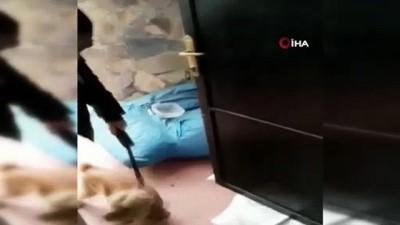 uyusturucu madde -  Narkotik köpeği Eko bingo yaptı