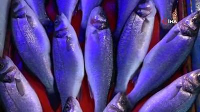 Değişen hava durumu balık fiyatlarını etkiliyor