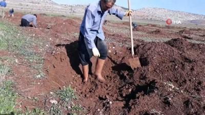 Arabanlı çiftçiler antepfıstığı üretimine yöneldi