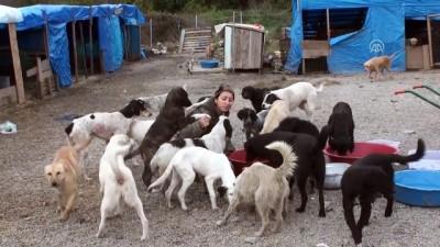hapis cezasi - Hayvan hakları için çöplükte açlık grevi yapıyor - BARTIN