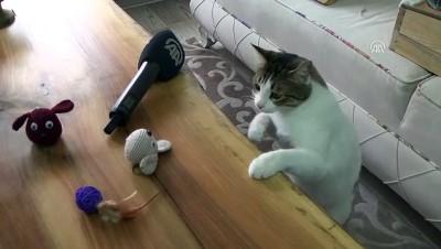 İki bacağı olmayan kediyi hayata bağladı - ANKARA