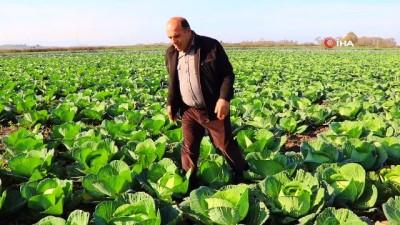 gubre -  Mor ve beyaz lahana altın yılını yaşıyor...Lahana tarlaları havadan böyle görüntülendi