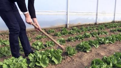 Genç Çiftçi Projesi'yle memleketine döndü - EDİRNE