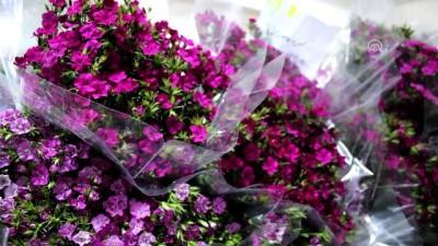 Çiçek mezatlarında Sevgililer Günü hareketliliği - YALOVA