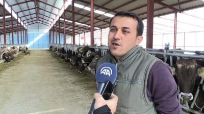 Almanya'dan getirdiği ineklerle Antalya'da çiftlik kurdu