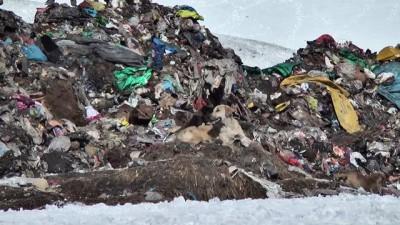 Sıcak hava ve çöplük bozayıların uykusunu kaçırdı - KARS