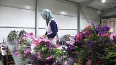 Çiçek ihracatında 2018 hedefi 100 milyon dolar - ANTALYA
