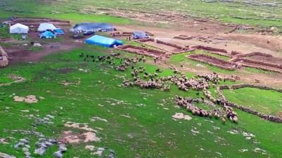 Fakıbaba '300 koyun' projesine açıklık getirdi - ŞANLIURFA