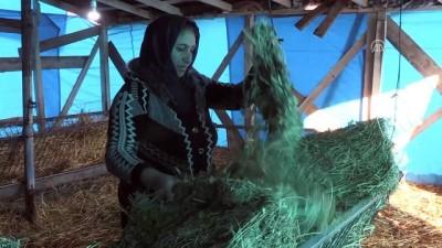 Koyunları annesi yemle kendisi 'notalarla besliyor' - EDİRNE