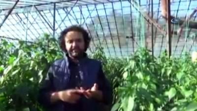 Sebze üretimiyle ilgili ironi videosu çeken öğretmen açığa alındı
