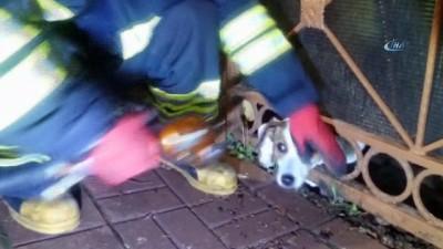 Kafası demir parmaklığa sıkışan köpeği itfaiye kurtardı