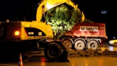 Denizli'de çok sayıda ağaç büyükşehir belediyesinin iş makineleriyle söküldü