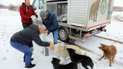 Sokak hayvanlarını kara kışta da yalnız bırakmadılar