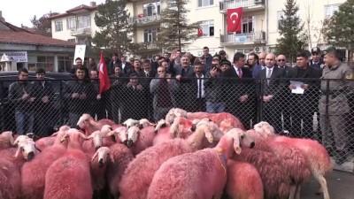 Çobanlardan Mehmetçik'e 'kınalı kurbanlık' - YOZGAT