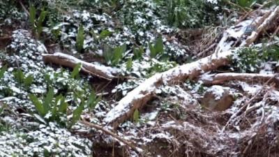 Güney Marmara'ya mart karı yağdı