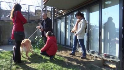 Rehber Köpekler Derneğinden gönüllülere teşekkür - İSTANBUL