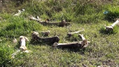 Terk edilmiş arazide yüzlerce hayvan kafatası bulundu