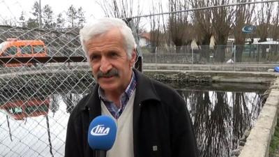 Çankırı'daki 'asker balıklar'ın Afrin'e gittiği düşünülüyor