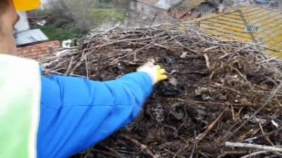 Leylek yuvalarında bahar temizliği