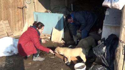 Sokak hayvanlarının gönüllü 'doktor bakıcıları' - HAKKARİ