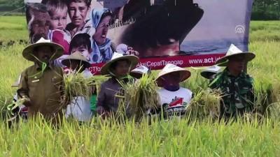 Endonezyalı çiftçilerden Suriye'ye pirinç yardımı - AÇE
