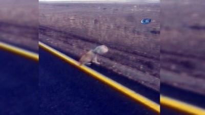 Kafası bidona sıkışan yavru köpek son anda kurtarıldı