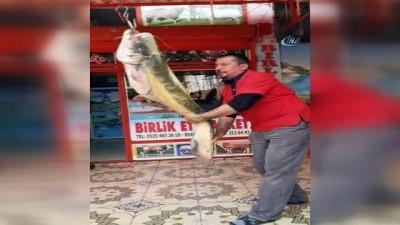 Oltayla 45 Kiloluk Yayın Balığı Yakaladı