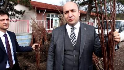 Kivi üretilemeyen alanlarda Trabzon hurması yetiştirilecek - YALOVA