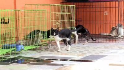 Kedi sevgisi yuva sahibi yaptı - CAKARTA