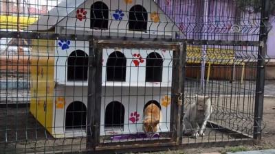 Minik kalpler 'sokak kedileri' için atıyor - AĞRI