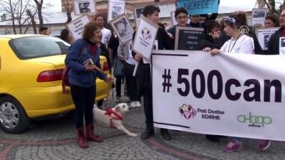 Sokak köpeklerinin kaybolduğu iddiası - EDİRNE