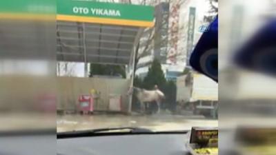 Atını tazyikli suyla yıkadı