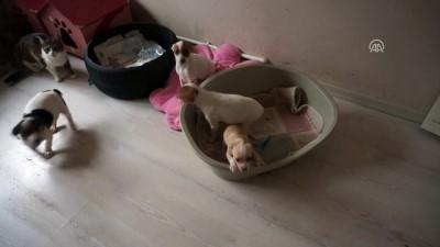 Yurda kaçak getirilen köpekler açık artırmayla satılacak - EDİRNE