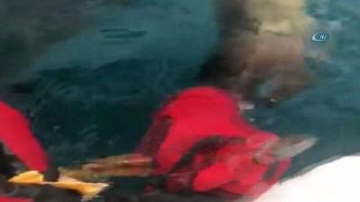 Rapalaya yakalanarak ölümle pençeleşen martıların yardımına dalgıçlar yetişti